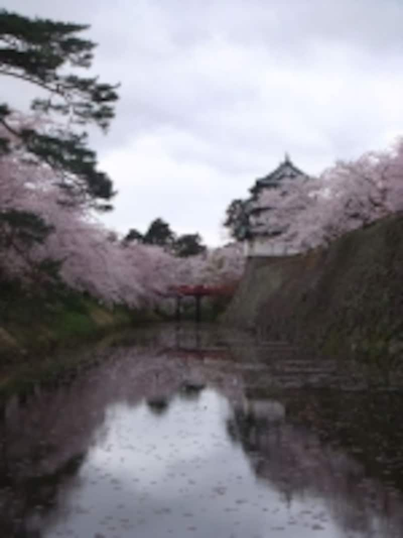 弘前城の桜(19)/内濠越しに望む天守閣と桜