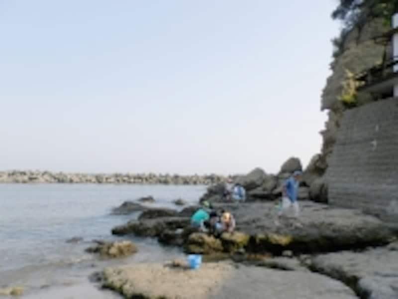 小動岬の岩礁
