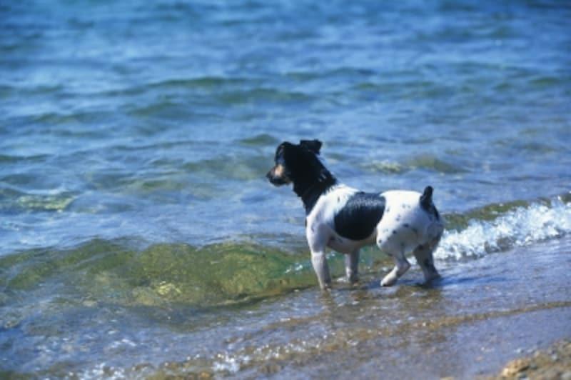 海辺で戯れる犬