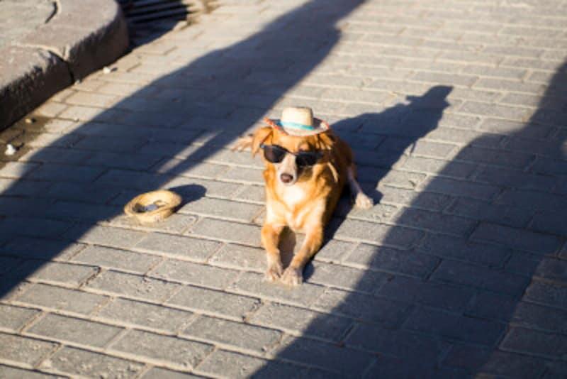 愛犬の夏を少しでも涼しくする方法
