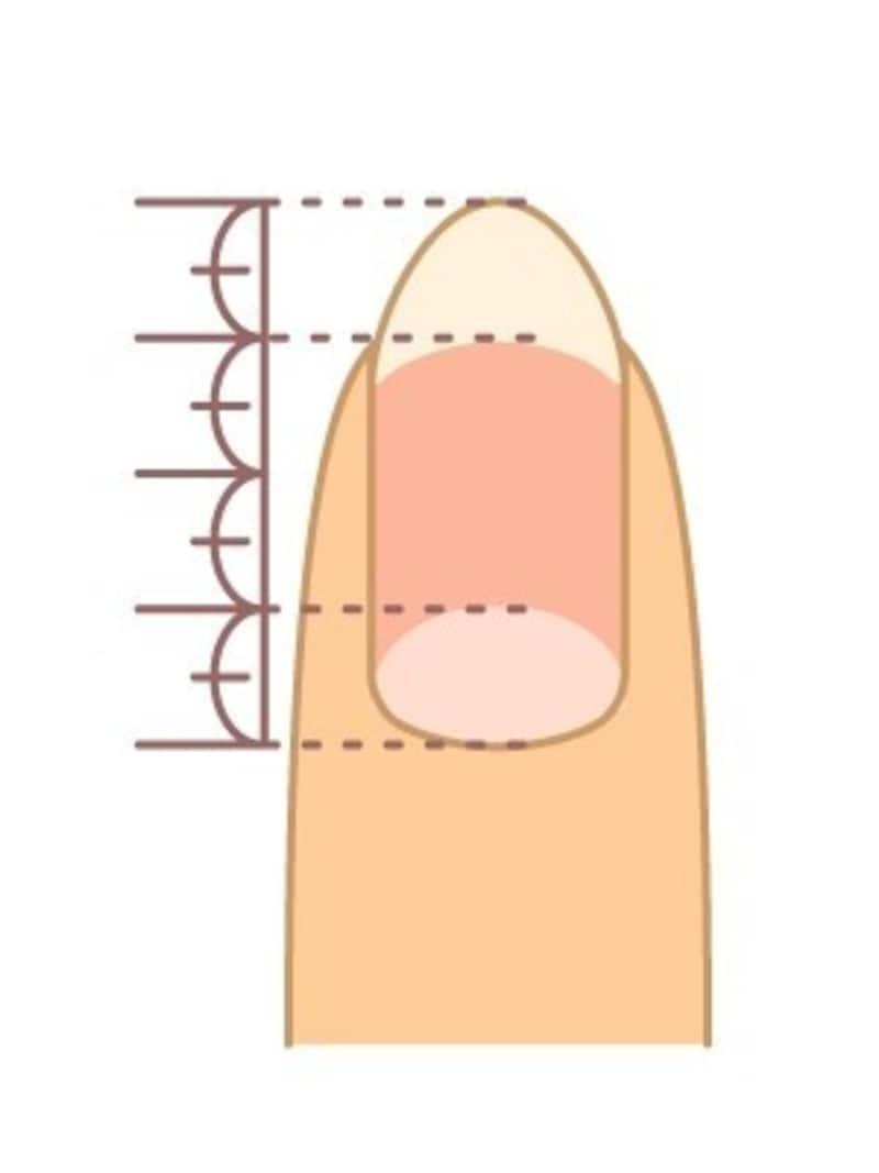 爪根元の白い部分と爪先の白い部分それぞれが、全体の4分の1程度だと綺麗な長さだと言えます