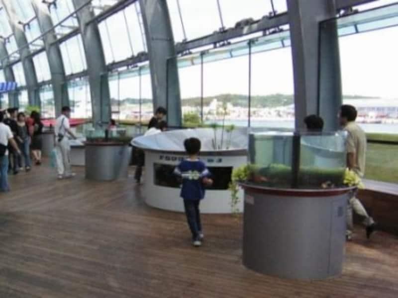 様々な金魚が常設展示されている