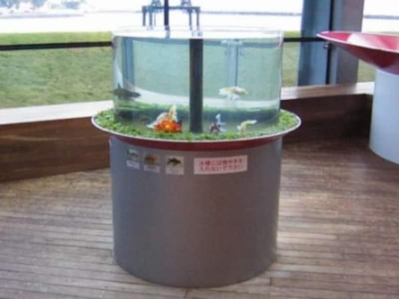 円筒状の金魚水槽