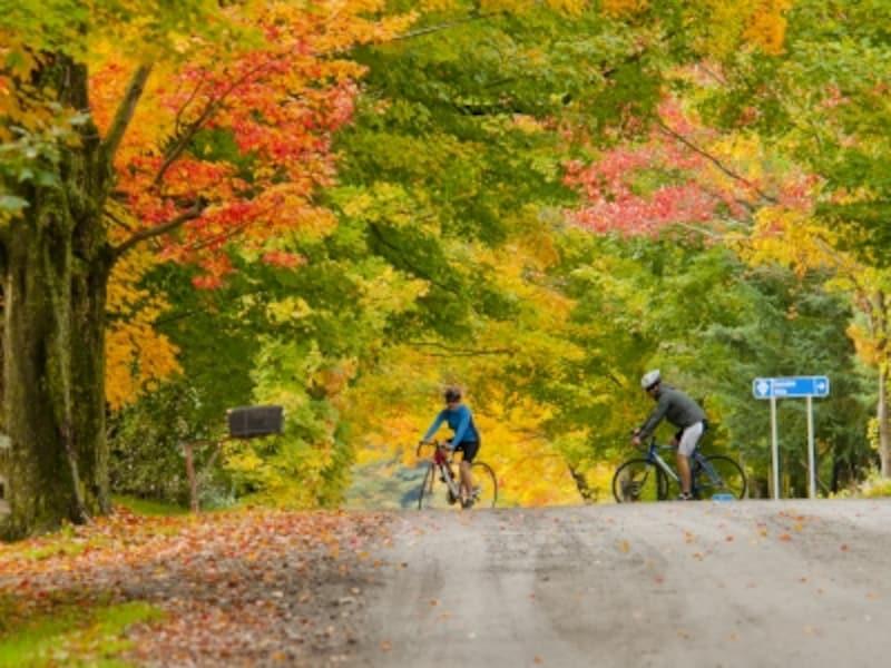 紅葉の見ごろは例年10月初旬(C)Bergeron,Jean-Fran?ois/EnviroFoto,TourismQuebec