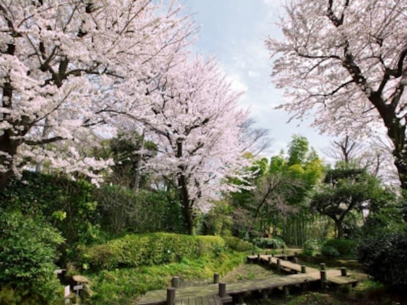 実篤公園(徒歩7分/約540m)