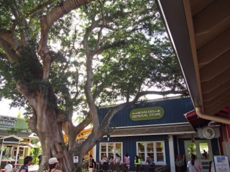 マツモトシェイブアイスの店舗前。ハレイワ・ストア・ロットには、ファッションブティックやレストランなど約20店舗が並ぶ