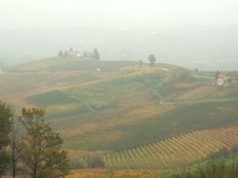 秋の紅葉時期から冬には霧もかかるピエモンテ州のブドウ畑