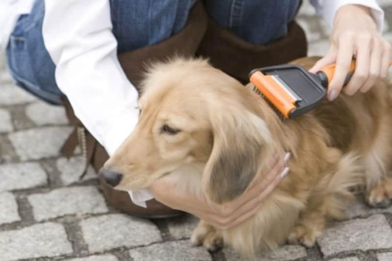 ブラッシング中の犬