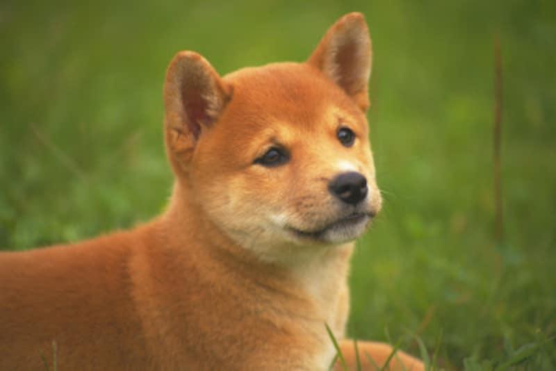 子犬のしつけが失敗するのは、飼い主が原因?