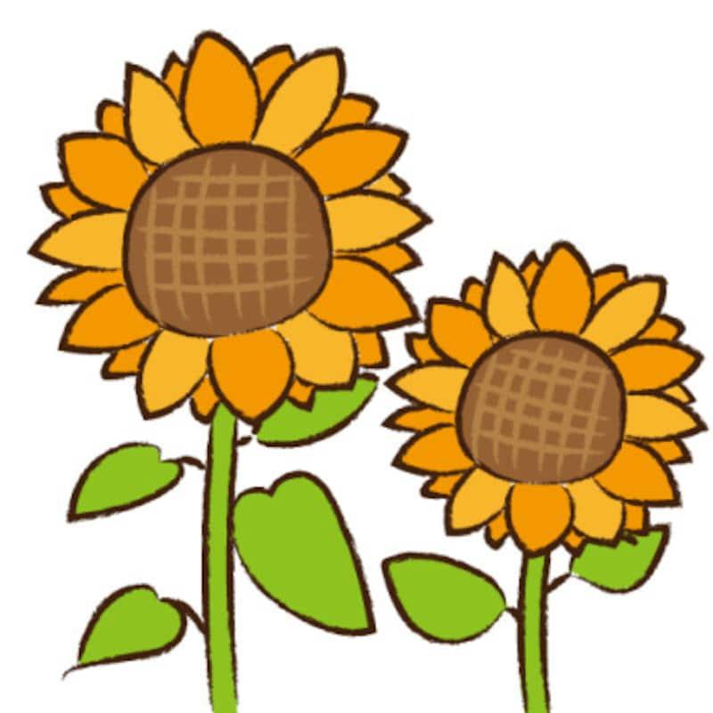 暑中見舞い イラスト 無料 フリー ひまわり 夏 カラー