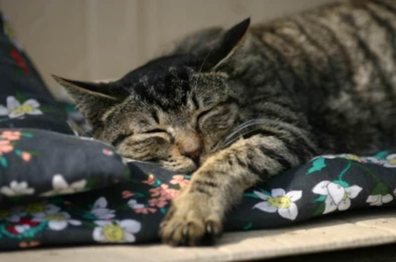 SlepingCat