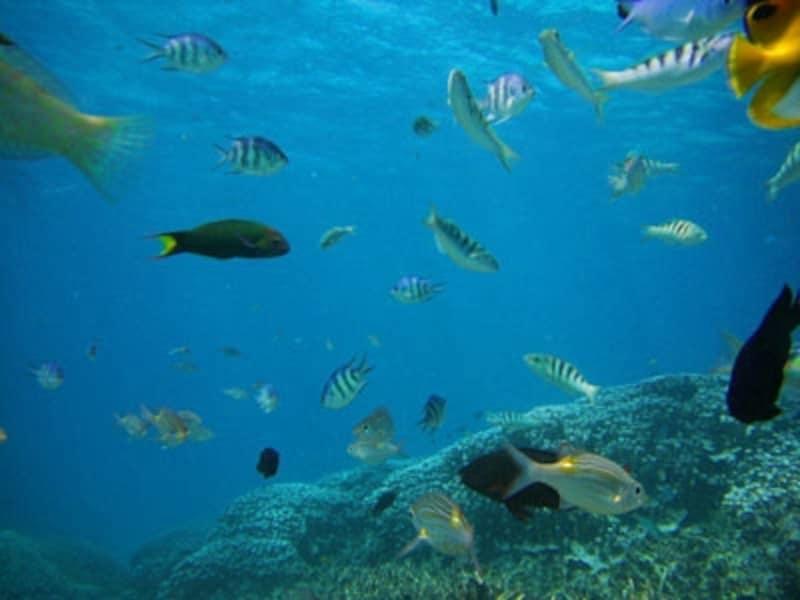 宮古島の海を泳ぐ熱帯魚たち。元気な珊瑚の海ならではの光景undefined写真提供:宮古島ナビ