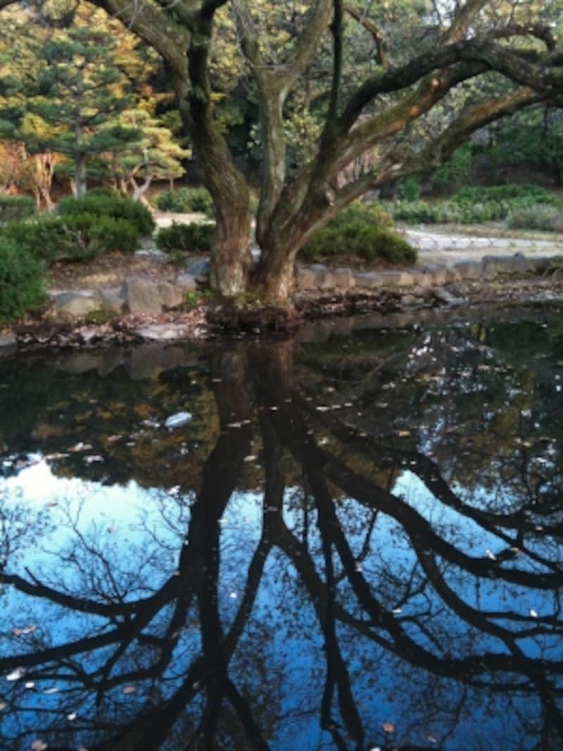 池に反射した木