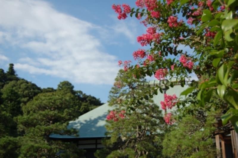浄妙寺の百日紅(サルスベリ)