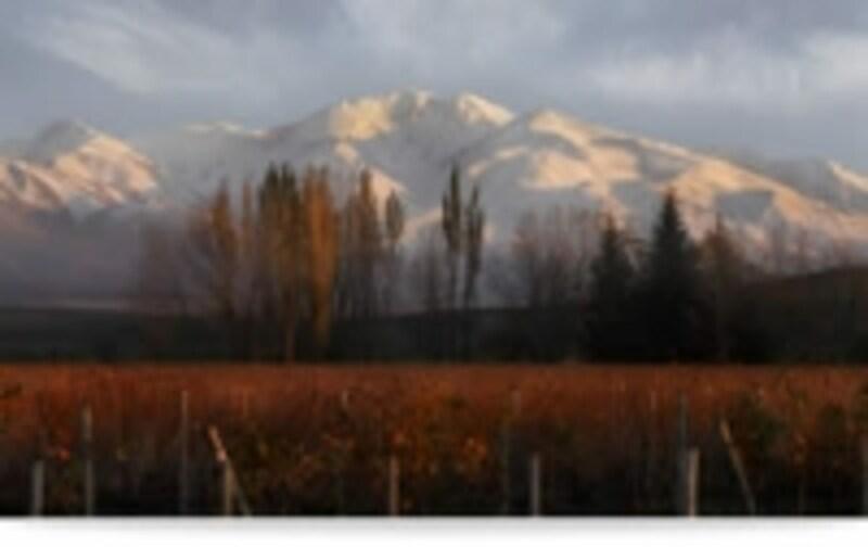 アンデス山脈の麓にブドウ畑が
