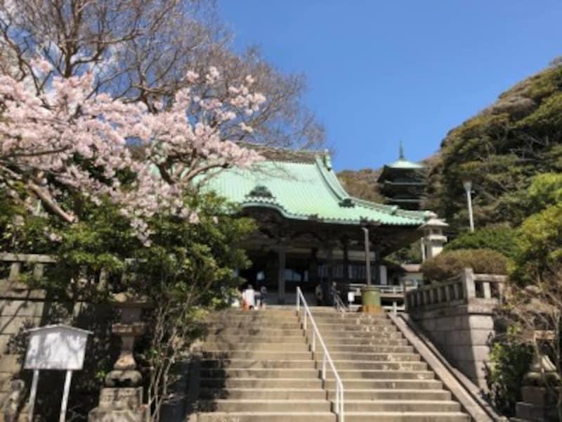 桜の季節の龍口寺