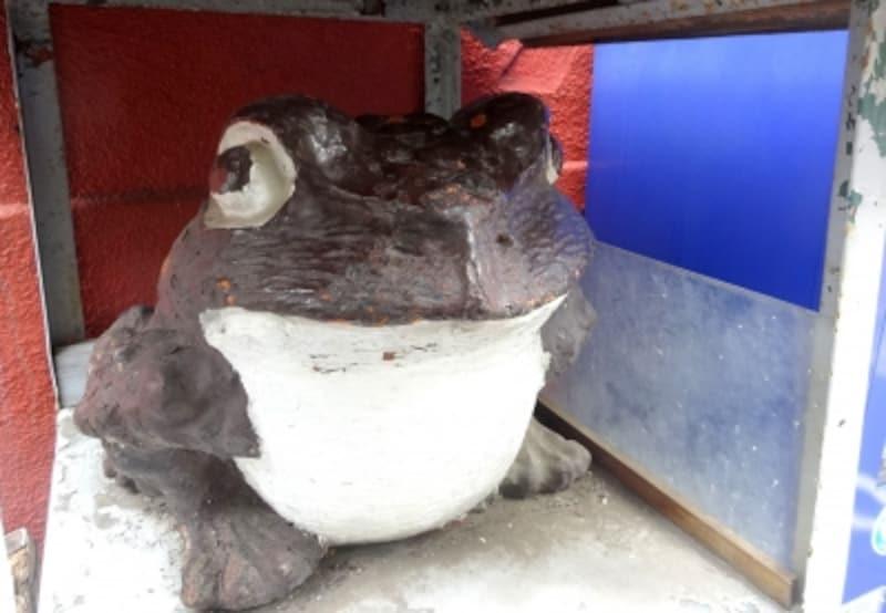 けっこう立派な蛙さん
