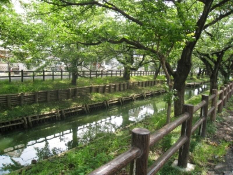 川越氷川神社の裏手、緑あふれる新河岸川。