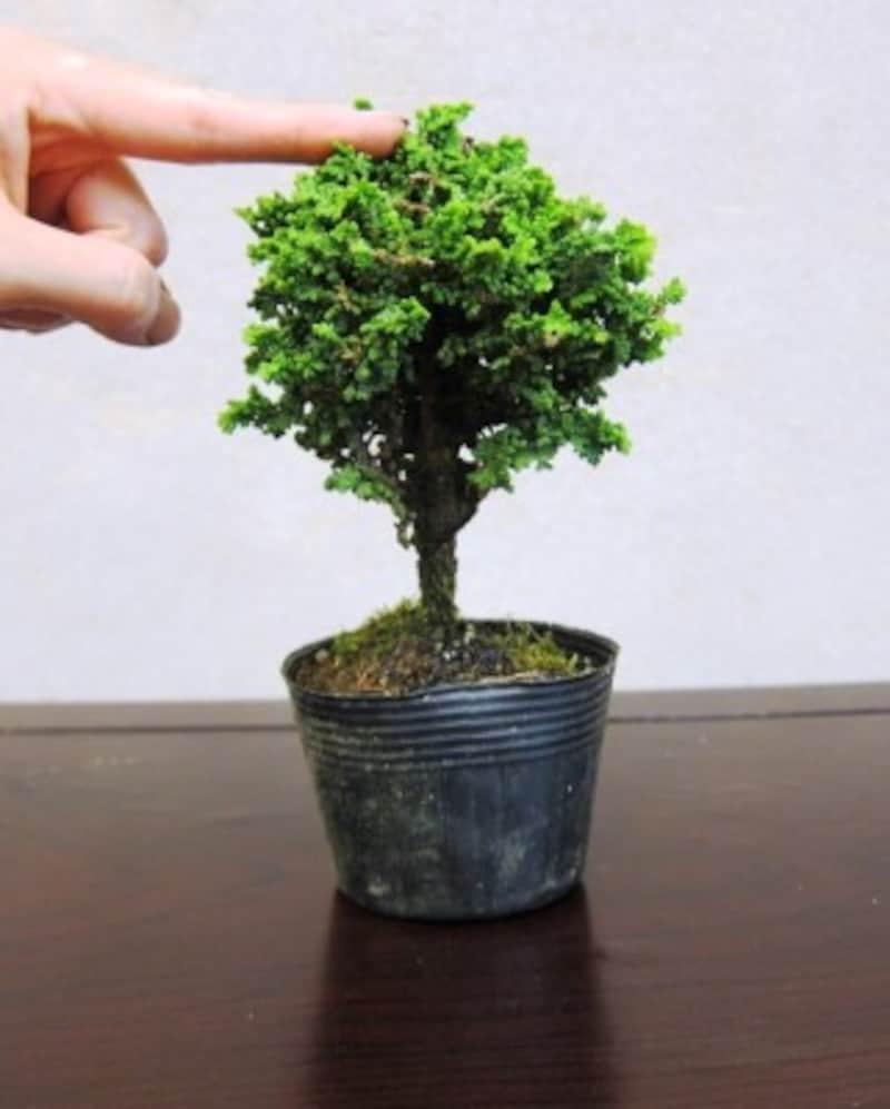 木の頂点を決める