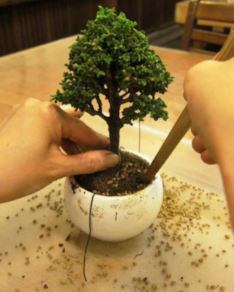 幹をまっすぐにして植え付け