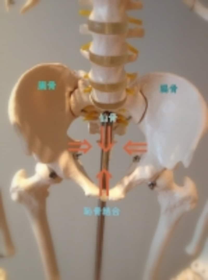 4つの骨をセンターへと近づけましょう