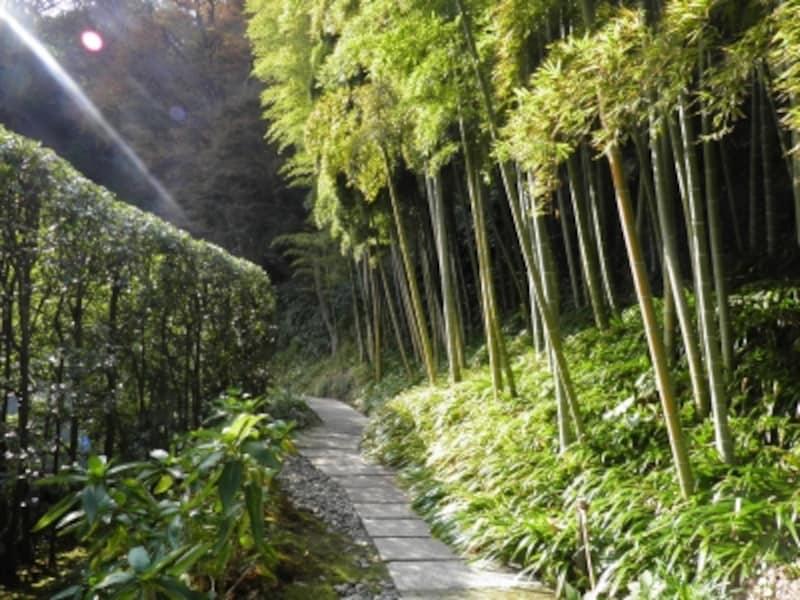 長寿寺裏手の竹林