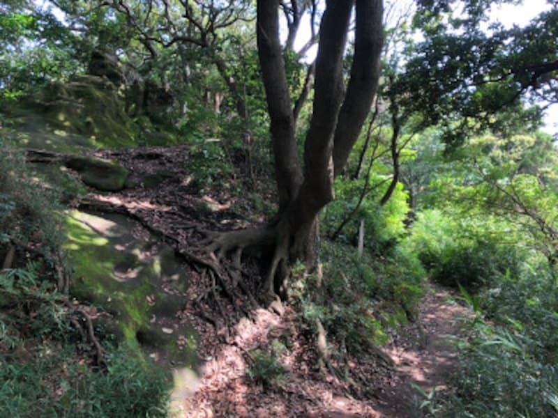 真っ直ぐの道と、左手の岩の上への道が分かれる