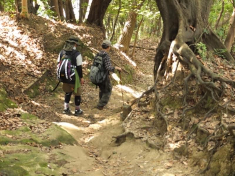 割と本格的な山歩きが楽しめる鎌倉のハイキングコース