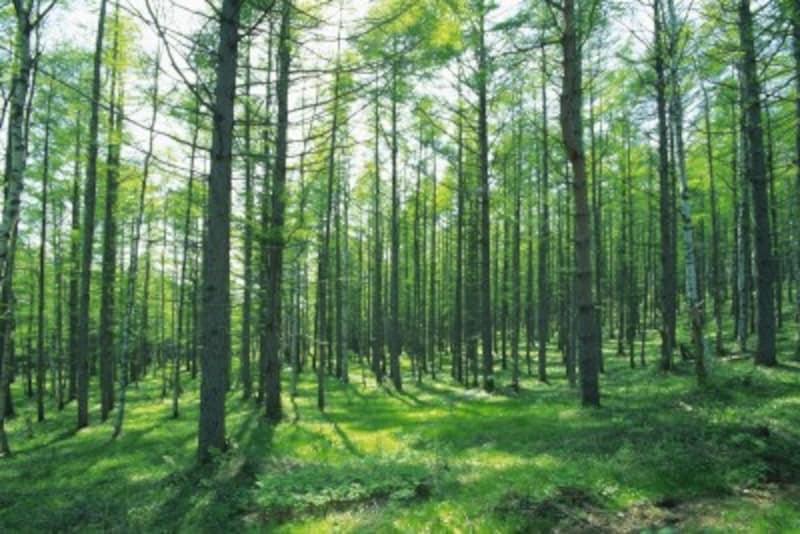 日本は緑豊かな国で木質バイオマスの宝庫