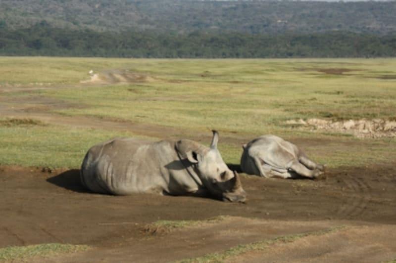 sleepingrhino