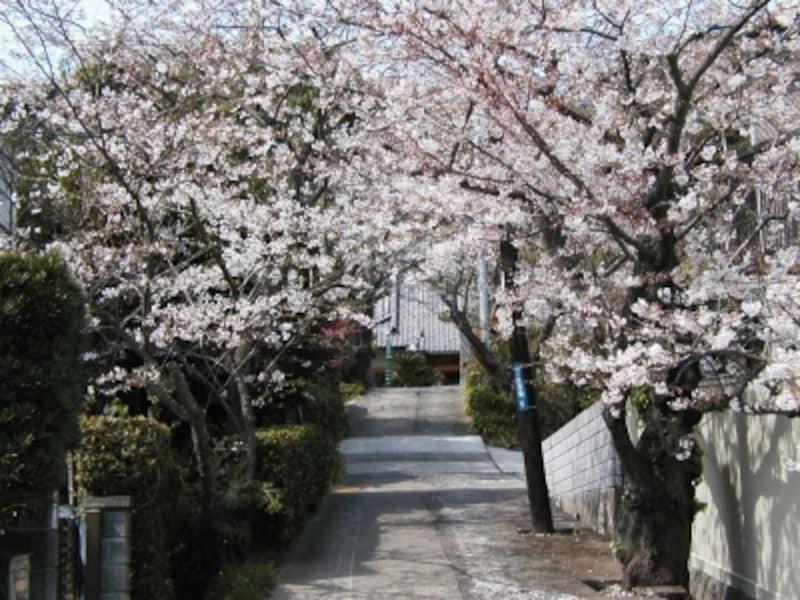 薬王寺は桜の穴場スポット