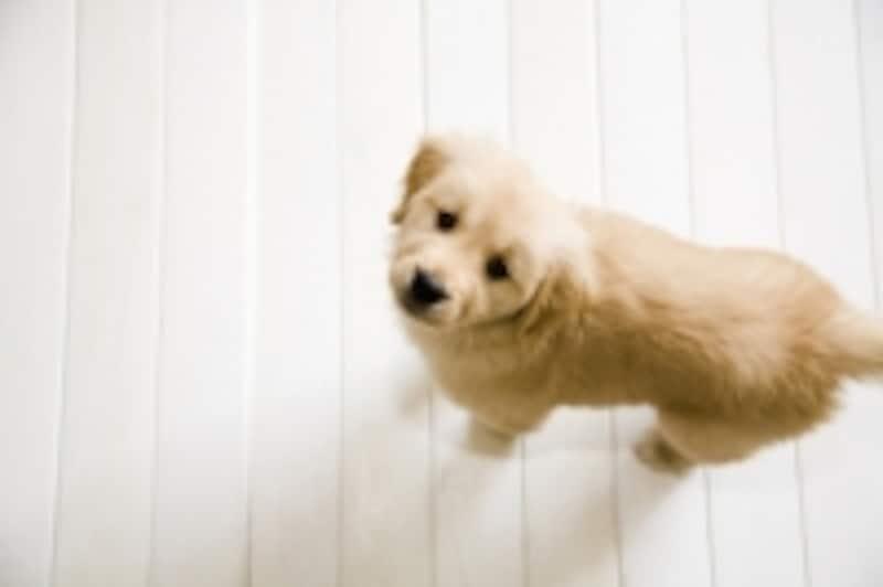 ペットの飛び出しを防ぐ意味で玄関との間に扉があるとよい