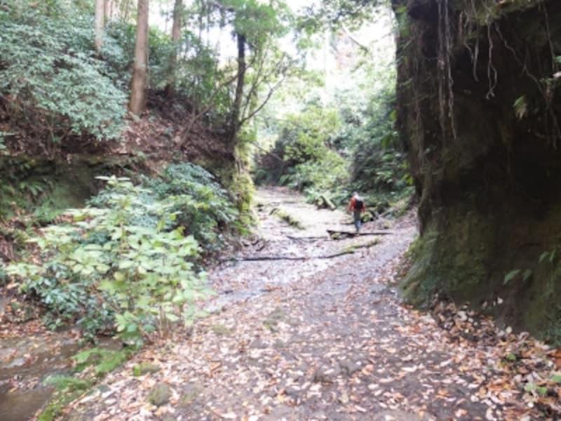「獅子舞の谷」への山道。割と本格的なハイキングコースだ(2013年11月27日撮影)