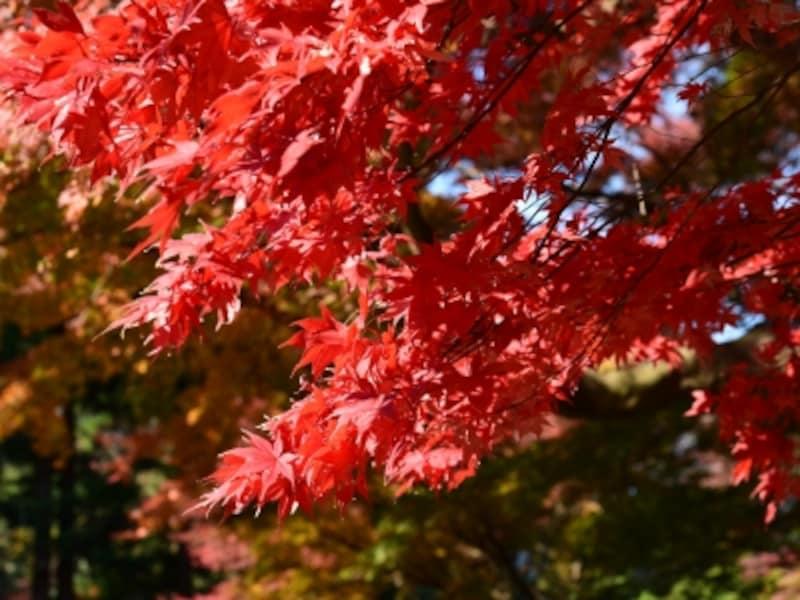 紅葉がきれいに撮影できる場所へ出かけよう!