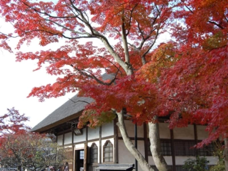 円覚寺選仏場と紅葉(2007年12月1日撮影)