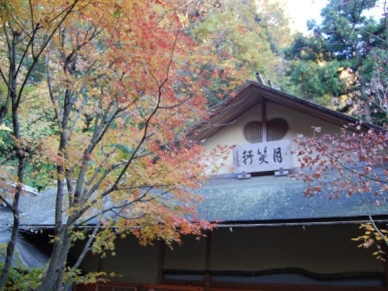 明月院紅葉のグラデーション(2008年11月30日撮影)