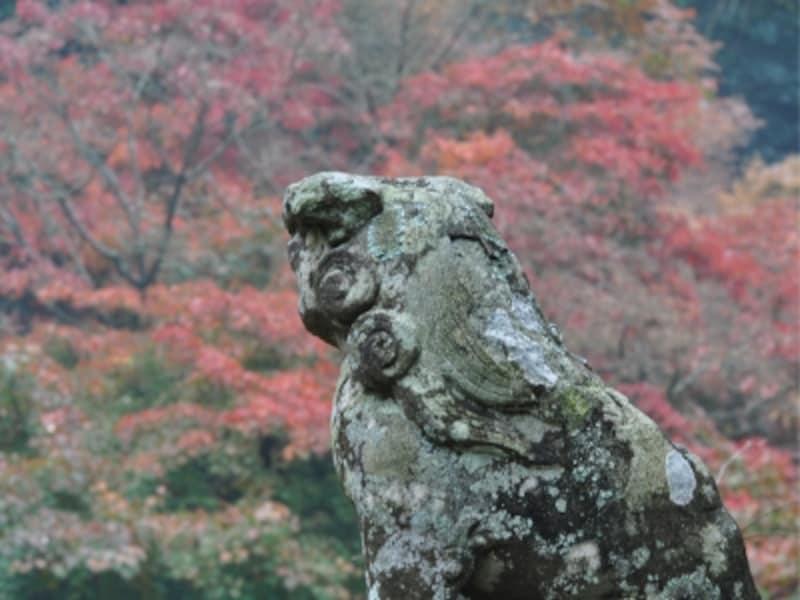建長寺の紅葉(2009年11月29日撮影)