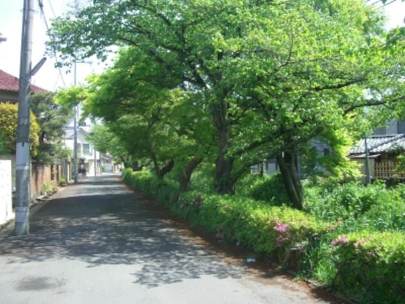 住宅の敷地以外にも緑が多く、空気がおいしく感じられた