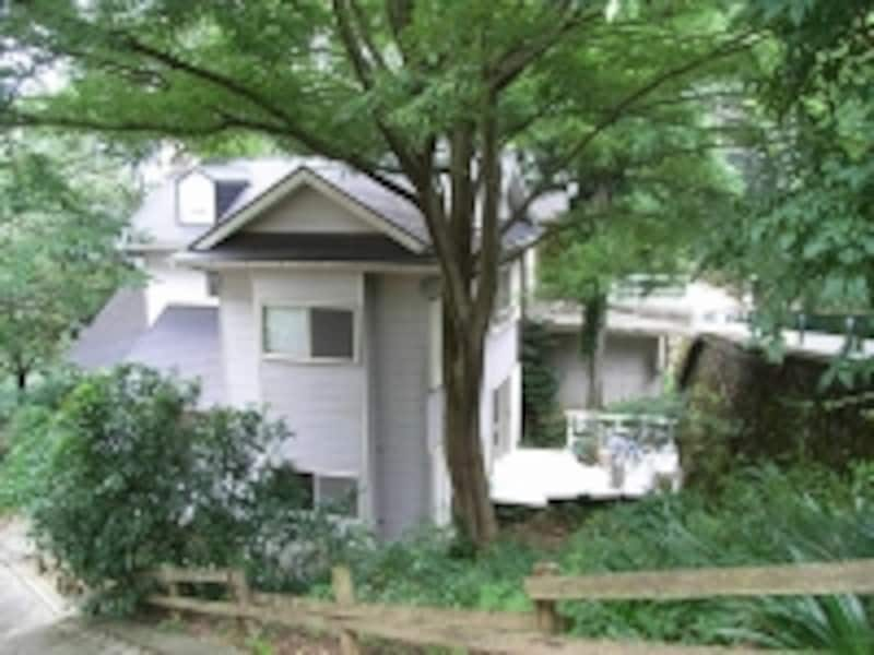 豊かな緑に囲まれた白い家が井田さんの別荘。