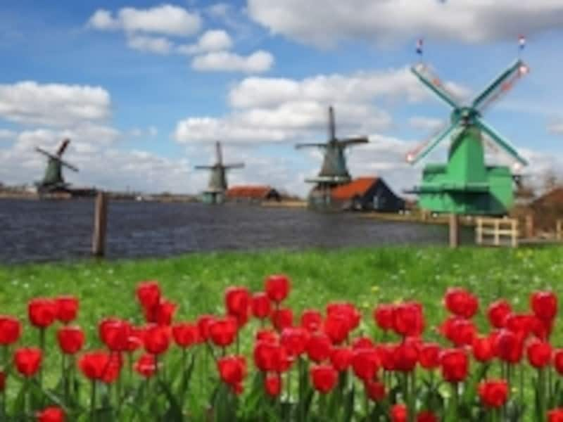 オランダの春の風物詩