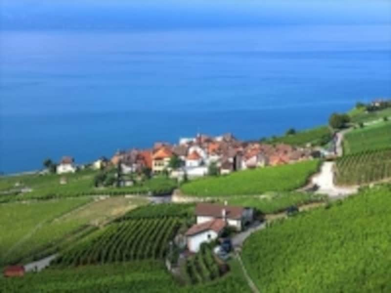 ワイン生産村