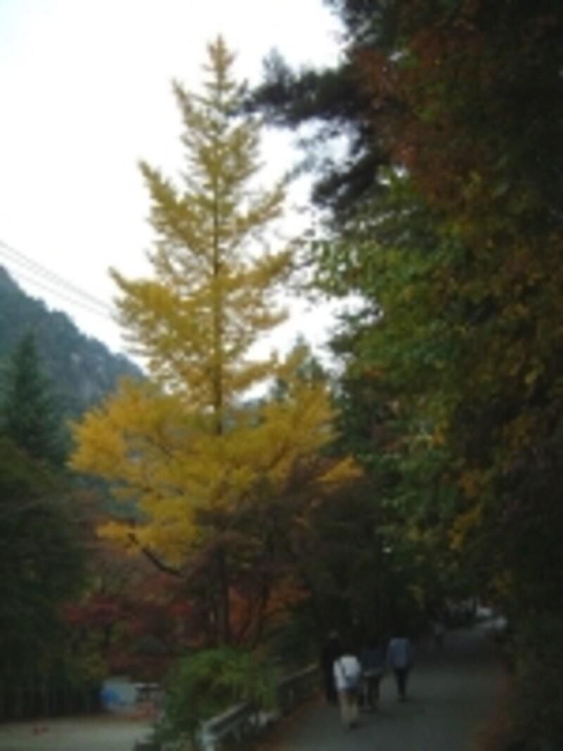 昇仙峡の紅葉・黄葉(2)