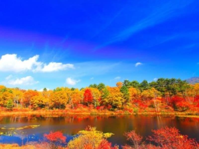 紅葉の樹林と一沼