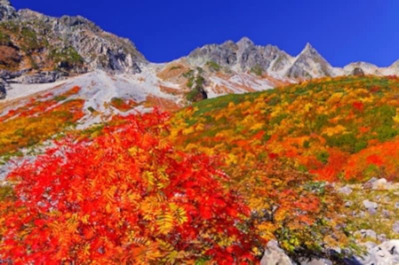 紅葉の涸沢とナナカマド