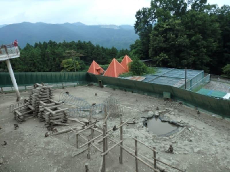宝登山小動物園のサル園
