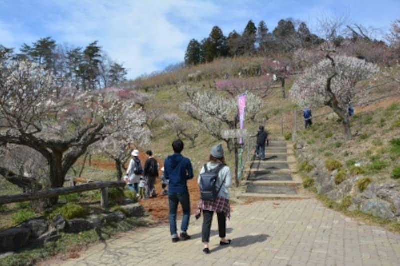 初春には紅白に彩られる宝登山梅百花園