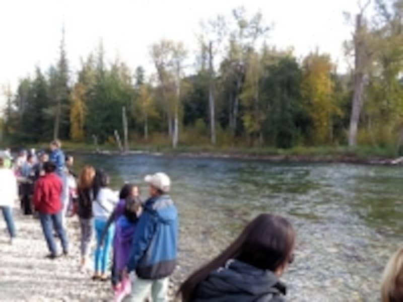 川原にもサーモンを見る観光客がたくさん