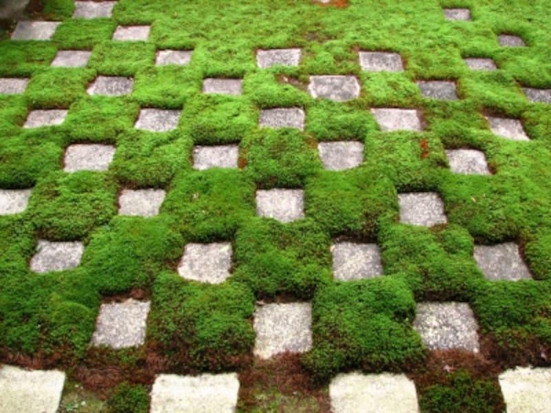 『八相の庭』のうち北側の小さな「市松模様」の庭