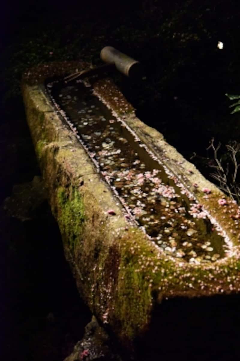 庭園には、豊臣秀吉の寄進という「一文字手水鉢」がある
