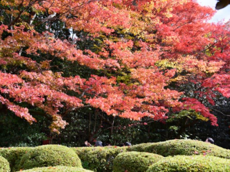 詩仙堂の紅葉